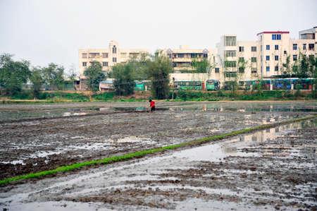 arable land: Chinese arable land