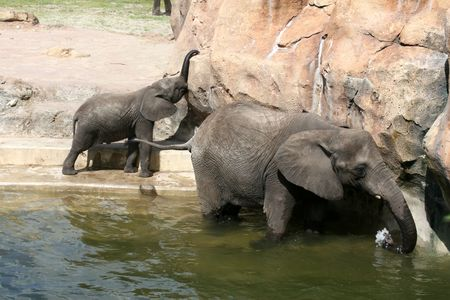 A mother elephant teaches her young how to take a bath Imagens