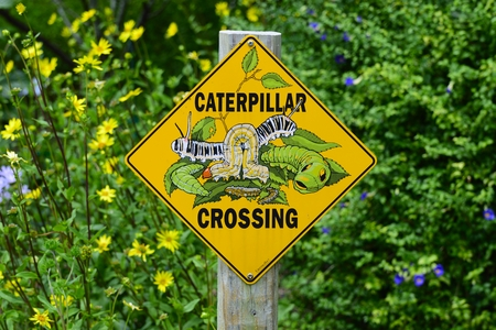 Caterpillar Crossing Sign At Florida Botanical Gardens In Largo, Florida