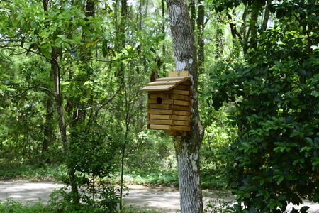 florida house: Wooden Bird House on a Tree in the Butterfly Garden at Florida State Park in the Springtime.