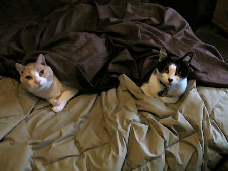 Undercover Cats photo