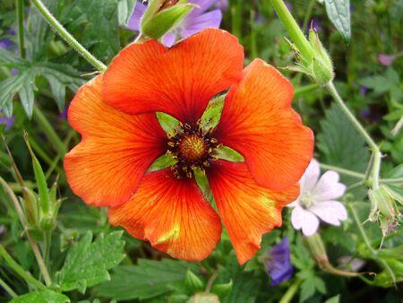 splendour: orange splendour