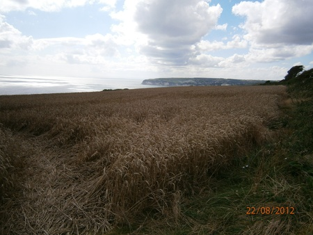Wheatscape