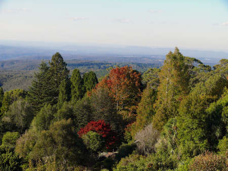 A view of the cool climate gardens at Mount Tomah in the Blue Mountains west of Sydney 스톡 콘텐츠 - 136812711