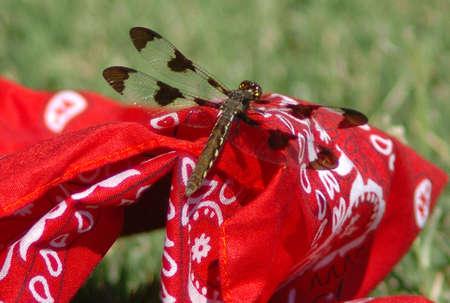 red bandana: drogon fly on a red bandana