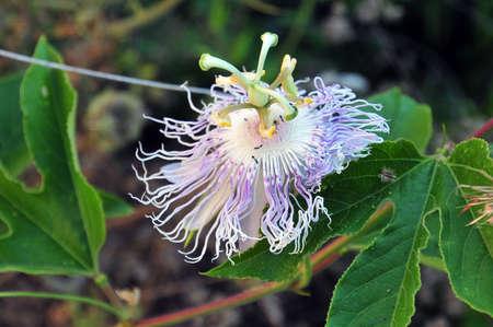 anemone flower: Insetti su un fiore anemone