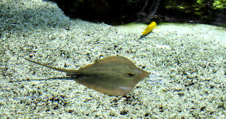 sting ray and fish