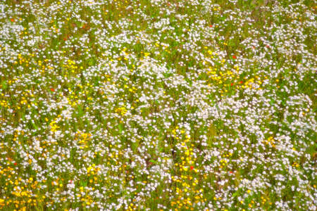 Field of wild flowers with romantic soft focus glow.