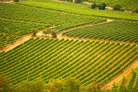 Aerial view of a vineyard in the South of France photo