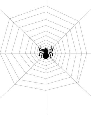 spiderweb: Spider on the net Illustration