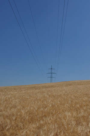 High voltage tower in the barley field Stock Photo