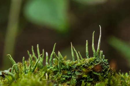 fungi: Macro photo of fungi and mold Stock Photo