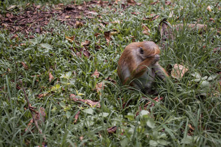 Sad monkey sitting on the grass and cries Stock Photo