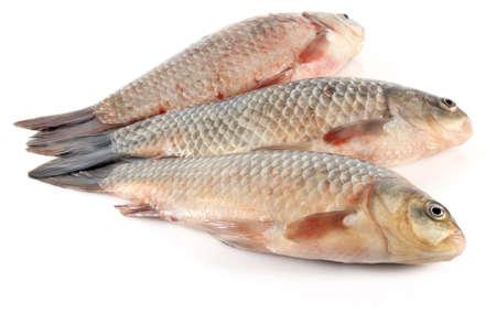three fresh fish isolated on white background Stock Photo - 12891137