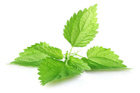 green leaves of nettle isolated on white background photo