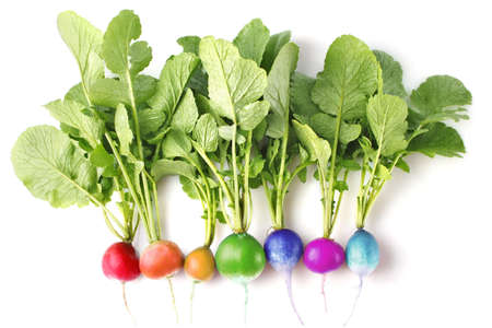 creative conception of fresh coloured radish isolated on white background
