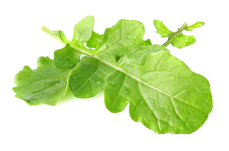 fresh juicy leaves of rukkula isolated on white background Stock Photo - 13826013