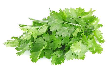 fresh leaves of cilantro isolated on white background Reklamní fotografie