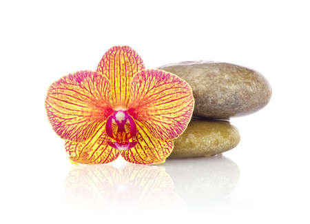 rose coloured: Striped flower of orchid with wet stones. Isolated on white background Stock Photo