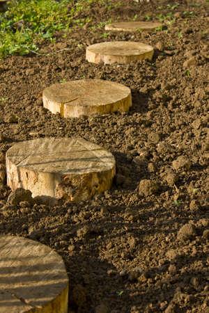 birchen: Round birchen stump on damp soil