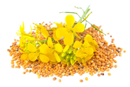 Flowers and seeds of mustard, isolated on white background.