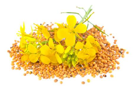 Fleurs et graines de moutarde, isolé sur fond blanc.