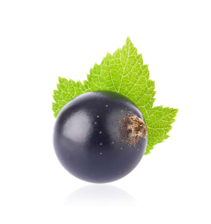 Fresh juicy black currant with green leaf, macro, all in focus, isolated on white background.