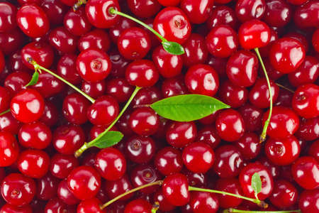 Background of ripe juicy cherries with green leaves.