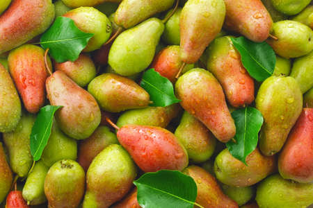 Background of ripe juicy organic farm pears with green leaves.