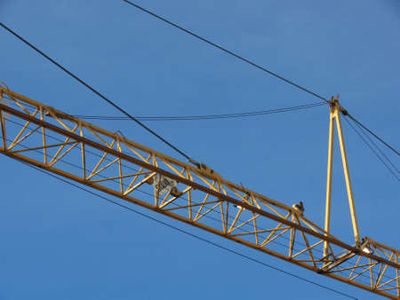 closeup portrait of yellow crane in blue sky  photo