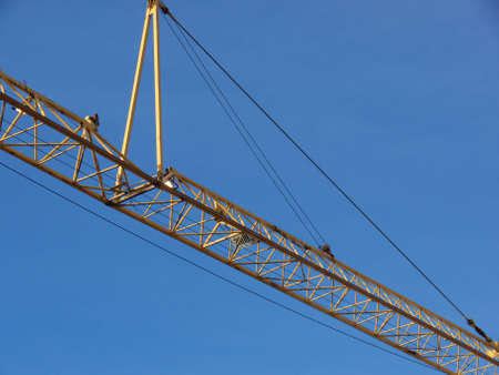 closeup portrait of yellow crane in blue sky Stock Photo - 817800