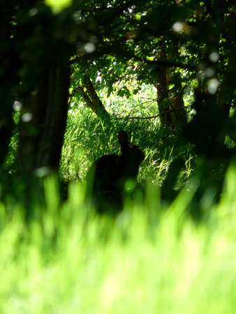 portrait of nature with rabbit silhouette Stock Photo - 953709