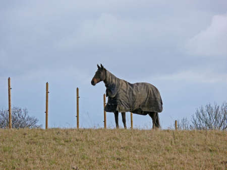 beatiful: portrait of a beatiful lonely horse on hill