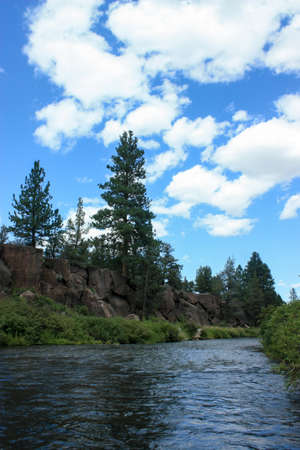 Pristine River and a gorge withe pines in Oregon featuring blue skies and a summer ambient