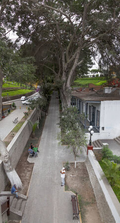 High angle view of trees along a street road, Lima, Peru 2011-06-18 2:42:33 PM