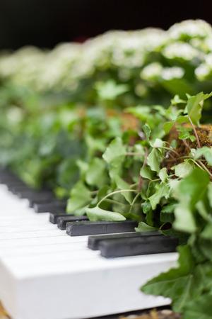 conservatory: Allan gardens conservatory Christmas piano by garden muses, Toronto, Ontario, Canada