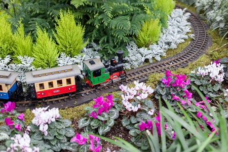 conservatory: Toy train surrounded by conservatory Christmas flowers at Allan Gardens, Toronto, Ontario, Canada