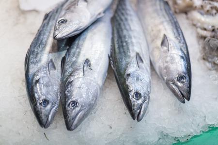 Display frozen mackerels for sale at a market, La Boqueria Market, Barcelona, Catalonia, Spaincolor image, canon 5DmkII