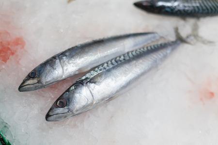 Weer te geven bevroren makrelen te koop bij een marktkraam, La Boqueria Markt, Barcelona, Catalonië, afbeelding Spaincolor, canon 5DmkII