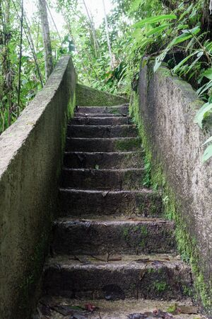 staircases: Low angle view of staircase in a tropical forest, Costa Rica