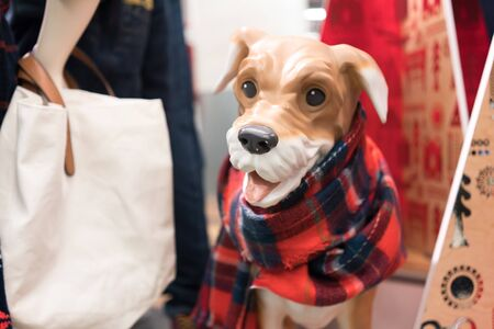shop for animals: Mannequin of dog displaying dog clothing and scarf in clothing store Stock Photo