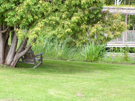 adirondack: Empty Adirondack chair by tree at park Stock Photo