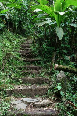 steps and staircases: Low angle view of staircase in a tropical forest, Costa Rica