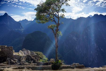 urubamba valley: Single tree with mountains in the background, Machu Picchu, Cusco Region, Urubamba Province, Machupicchu District, Peru