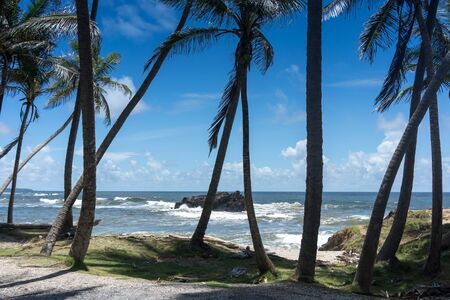 Scenic view of exotic beach with palm trees, Trinidad, Trinidad and Tobago