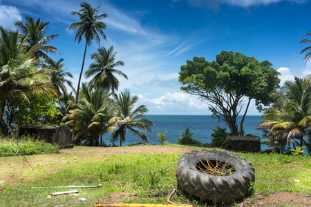 Abandoned tyre and palm trees on the coast, Trinidad, Trinidad And Tobago