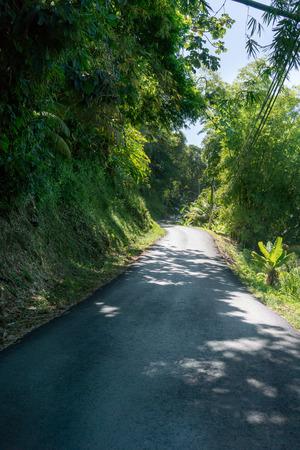 Road passing through forest, Trinidad, Trinidad And Tobago