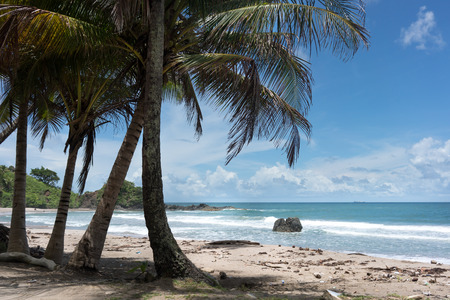 Palm trees on tropical beach, Trinidad and Tobago Imagens