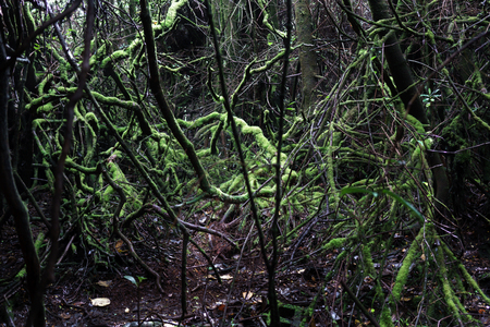 colour image: Colour Image, Photography, Day, Outdoors, No People, Horizontal, Tranquillity, Tranquil Scene, Nature, Non-urban Scene, Scenics, Idyllic, Forest, Lush, Rainforest, Majestic, Awe, Wood - Material, Spooky, Mystery, Growth, Tree, Costa Rica, Woodland, Root,