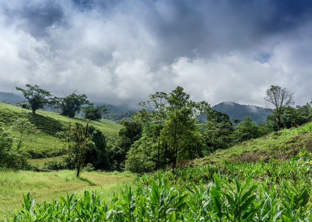 colour image: Central America, Costa Rica, Tree, Landscape, Rolling Landscape, Slope, Day, Outdoors, Nature, Idyllic, Lush, Tranquillity, Awe, Colour Image, Horizontal, Sky, Travel Destinations, Non-urban Scene, Tranquil Scene, Field, Forest, No People, Mountain Range, Stock Photo